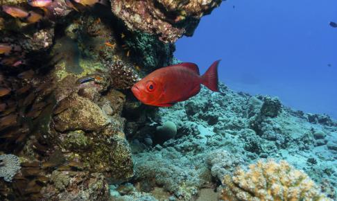 Great Barrier Reef i Australien