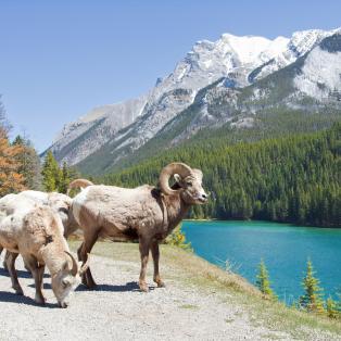 Banff_geder