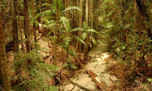 Regnskoven på Fraser Island - Risskov Rejser