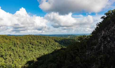 Regnskoven ved Minyon Falls - Risskov Rejser