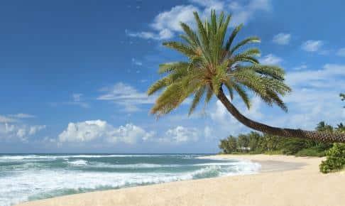 Et eksotisk eventyr på Hawaii kort - Risskov Rejser