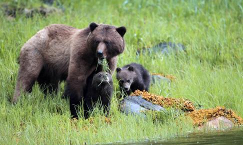 Whales & Bears - Risskov Rejser
