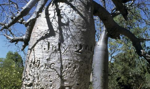 Gregory's Tree - Risskov Rejser