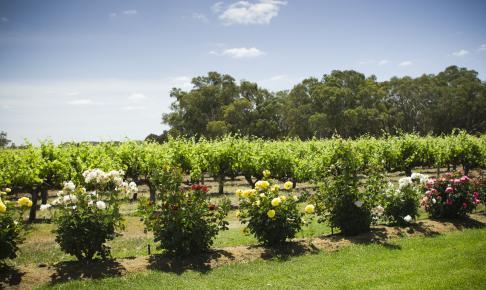 Eksklusiv vinrejse i Maui autocamper - Risskov Rejser