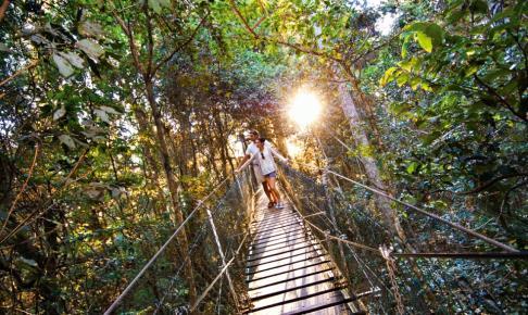 OReillys Tree Top Walk - Risskov Rejser