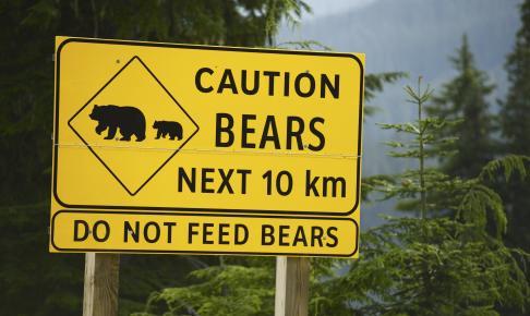 Pas på! Bjørne skilt - Risskov Rejser