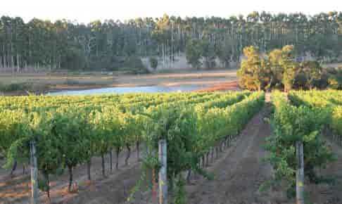 Winery at Margaret River, Western Australia - Risskov Rejser