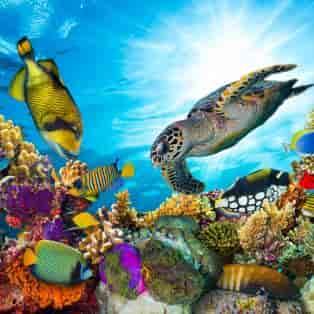Koralrev med mange forskellige farverige fisk - Risskov Rejser