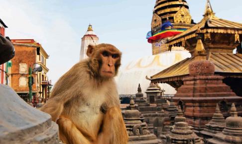 Abe tager et hvil på en af stupa'erne på Swayambhunath-templet i Kathmandu - Risskov Rejser
