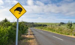 Kiwi skilt - Risskov Rejser
