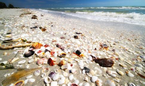 Strandskaller på stranden i Florida