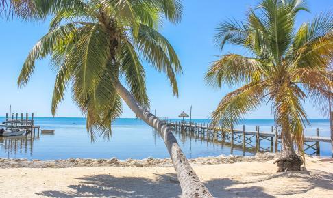 Strand og palmer Key West
