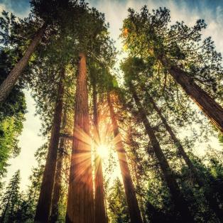 Yosemite National Park, Californien - Risskov Rejser