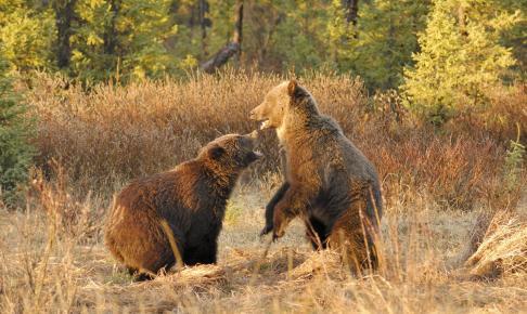 Spændende dyreliv i Jasper - Risskov Rejser