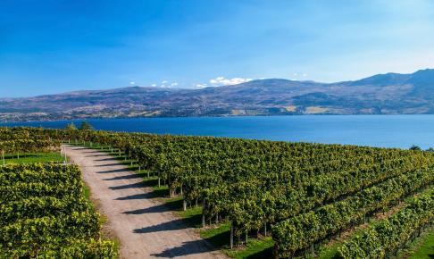 Vinrækker ved Lake Okanagan - Risskov Rejser