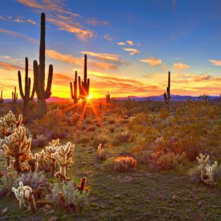 Solnedgang i Phoenix, Arizona - Risskov Rejser