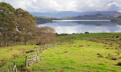 Hokianga Harbour Meadow - New Zealand - Risskov Rejser