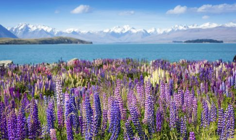 Landscape with lake and flowers, New Zealand - Risskov Rejser