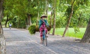 Kvinde cykler mellem de mange rismarker - Risskov Rejser