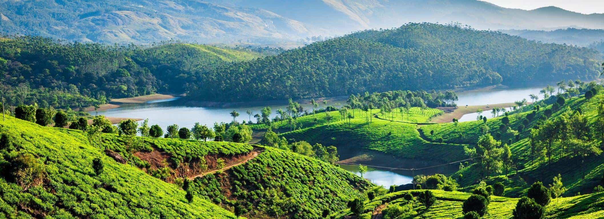 Teplantage i Indien - Risskov Rejser