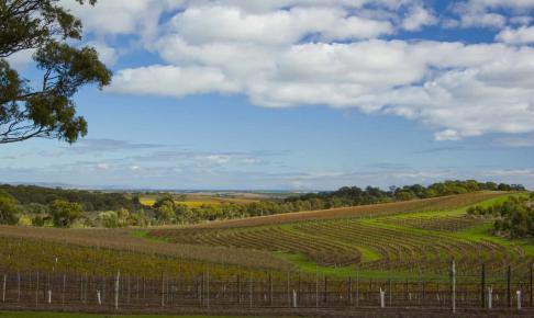Vinområdet Mc Laren Vale, South Australia - Risskov Rejser