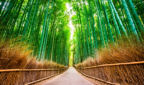 Kyoto Bamboo Forest.