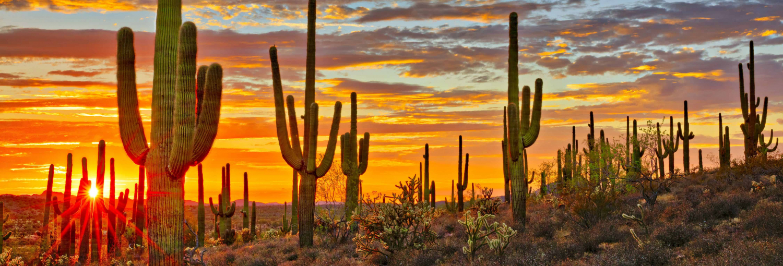 Arizona kaktus i solnedgang
