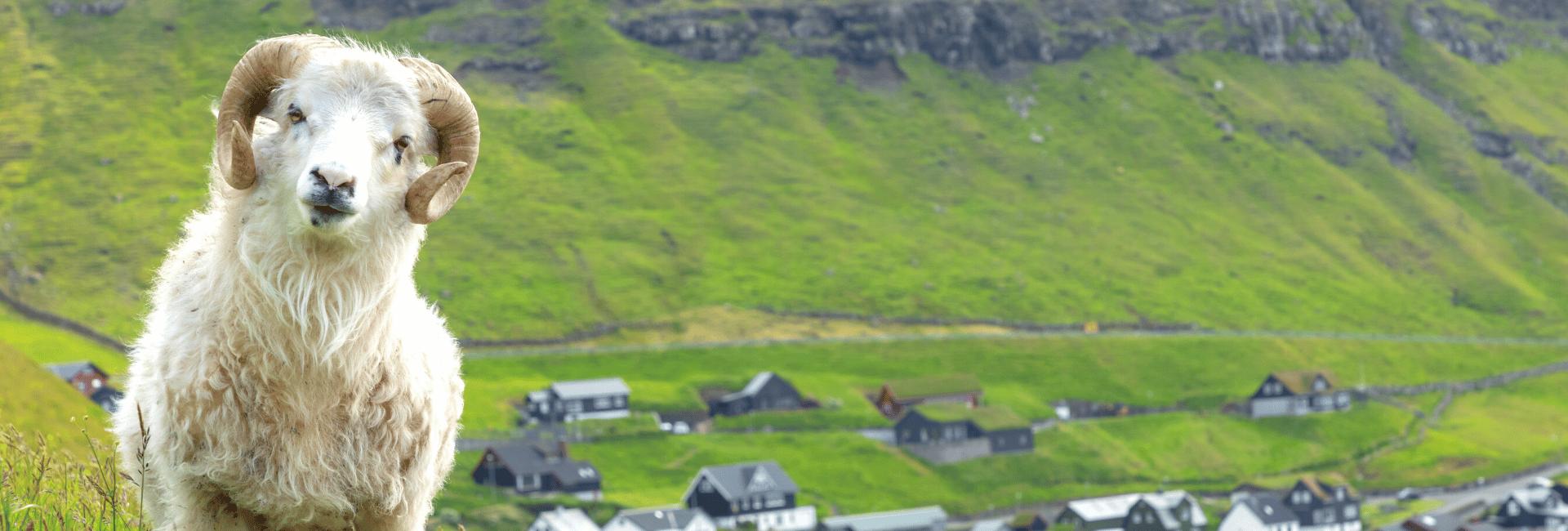 Danmarks bedste rundrejser til Færøerne med Risskov Rejser