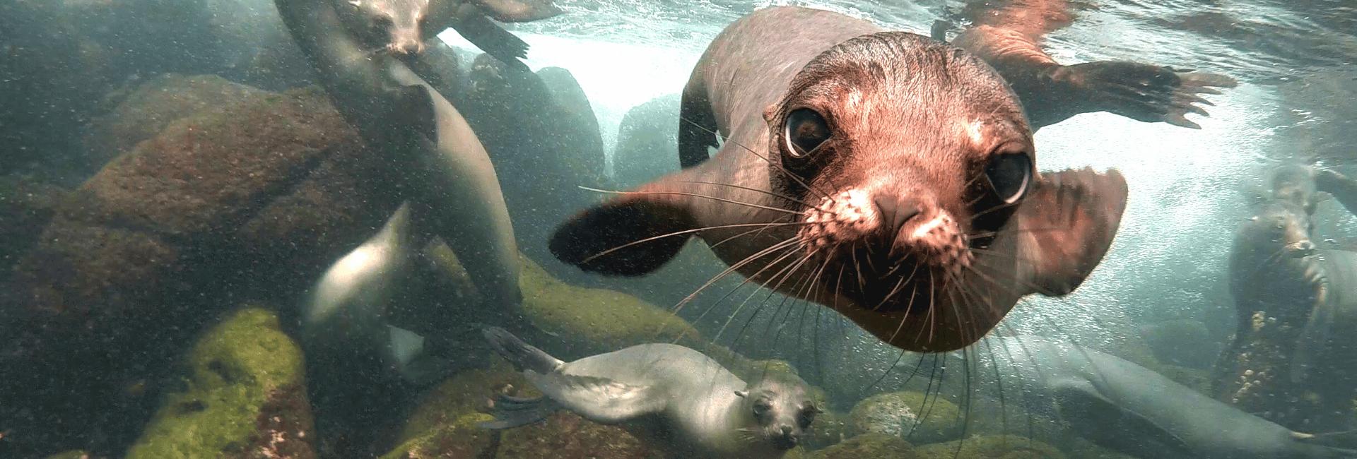 Oplev dyrelivet på Galapagos-øerne på en rejse til Ecuador