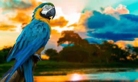 Macaw, Brasilien - Risskov Rejser