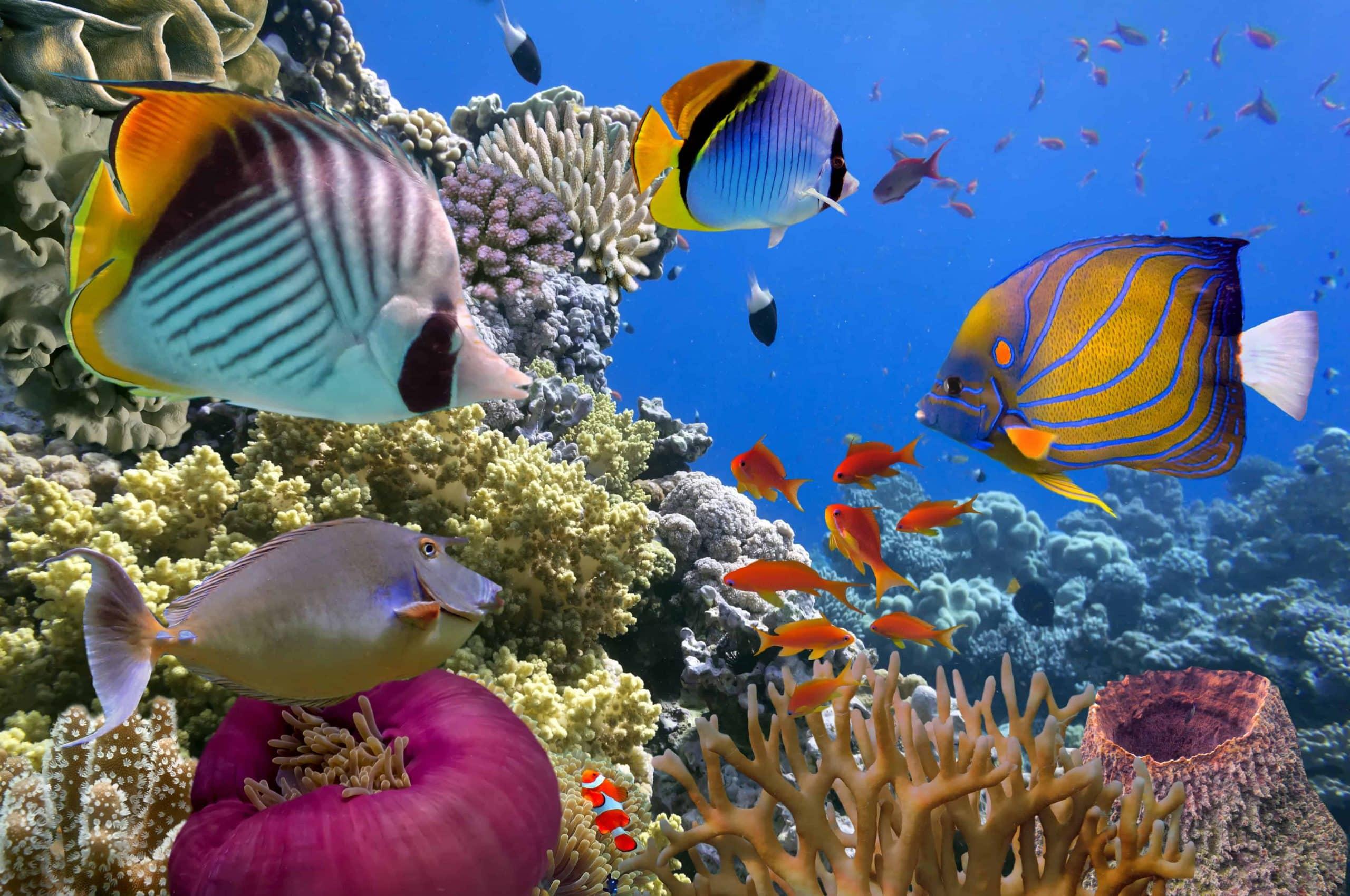 Great Barrier Reef, Australien - Risskov Rejser