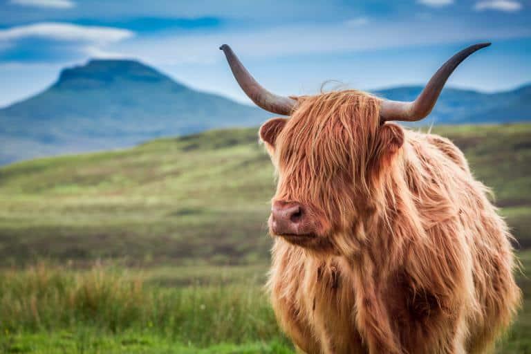 Højlandet, Skotland - Risskov Rejser