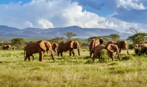 Kruger National Park, Sydafrika - Risskov Rejser