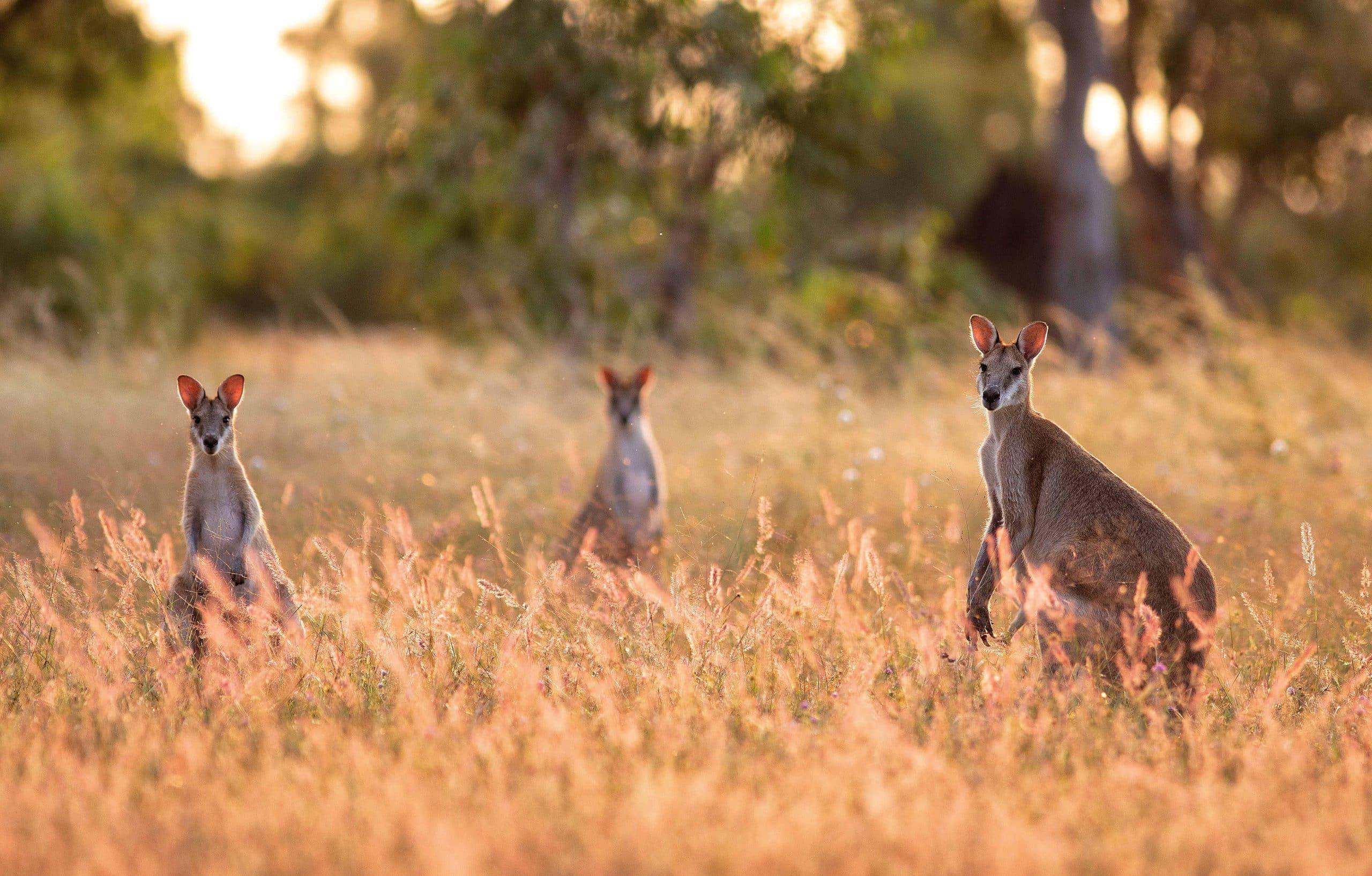 Australien - Risskov Rejser